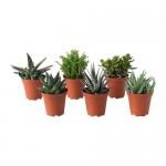 Succulents Potted Plant