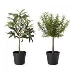 Künstlich Künstliche Topfpflanze