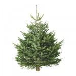 Nordmann-Tanne Weihnachtsbaum