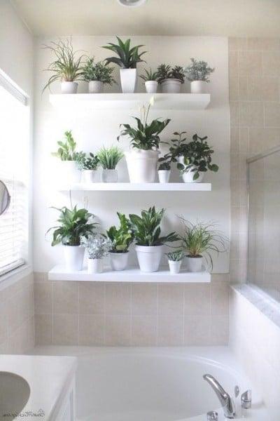 Mur vivant dans la salle de bain