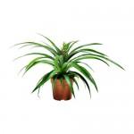 ANANAS растение в горшке Ананас 12 см