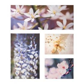 GRONBI conjunto de imágenes, piezas 4