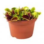 GRÖNSKAN растение в горшке насекомоядное/различные растения