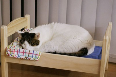 Cozy bed for pets!