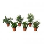 BLADVERK Topfpflanze verschiedene Pflanzen